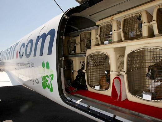 Leve o seu animal com conforto e segurança.