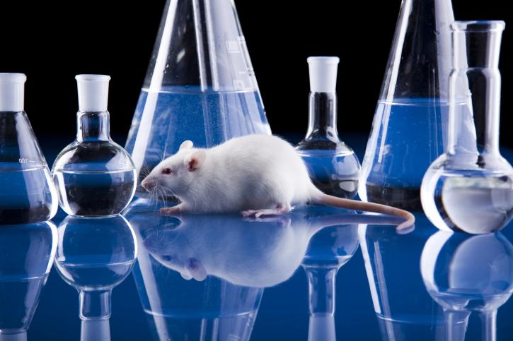 O camundongo é usado em diversos experimentos e mais uma vez ele faz parte de uma das maiores descobertas.