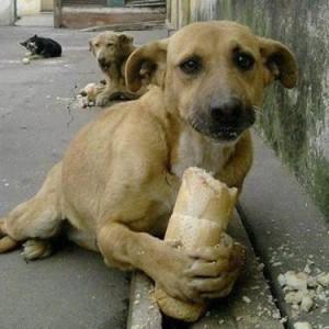 Essa foto já correu quase que o país inteiro. Ela demonstra a maneira feliz como o animal, protege o seu alimento, que tanto gosta, quando alguém vai o toma-lo.
