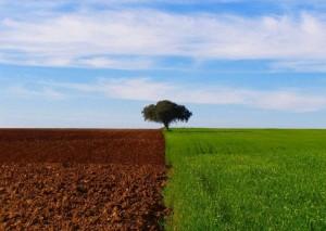 AGRICULTURA E IMPACTOS AMBIENTAIS