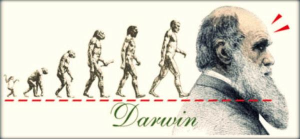 Evolução humana resumo