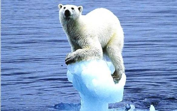 Os animais que sobrevivem mediante das ilhas, águas e pesca, estão desaparecendo cada vez mais rápido, pelo fato de estarem perdendo o seu habitat natural.