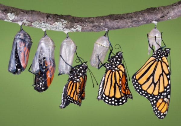 A palavra metamorfose também é usada para distinguir a mudança de algum hábito.