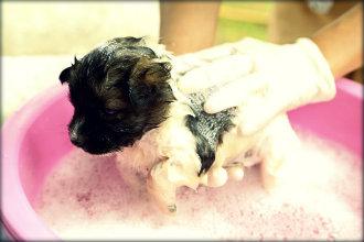 Dicas para evitar mau cheiro em cães peludos