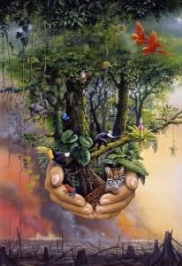 Como é provocado o desflorestamento