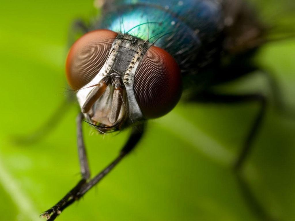 Como espantar moscas da cozinha brasil blogado - Como espantar moscas ...