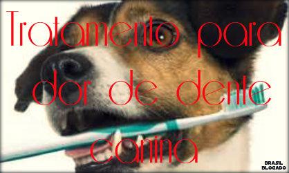 Dor de dente canina: causas, sintomas, tratamento e prevenção.