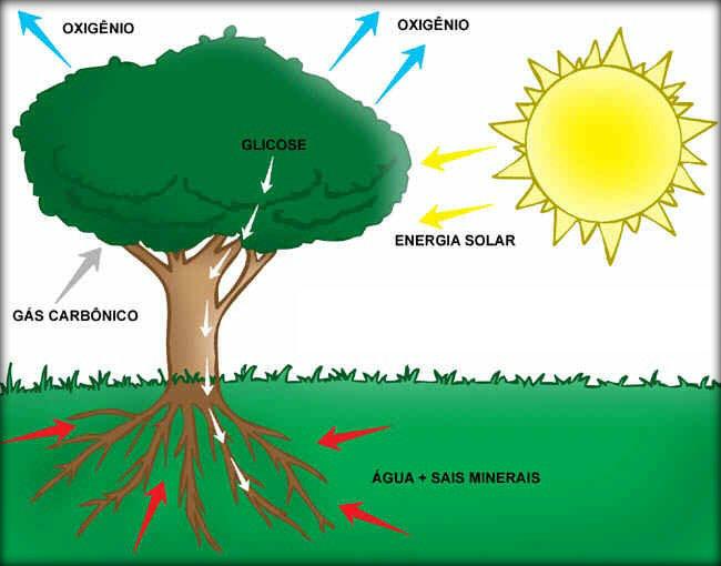 Esquema da fotossíntese. (Foto: Reprodução)