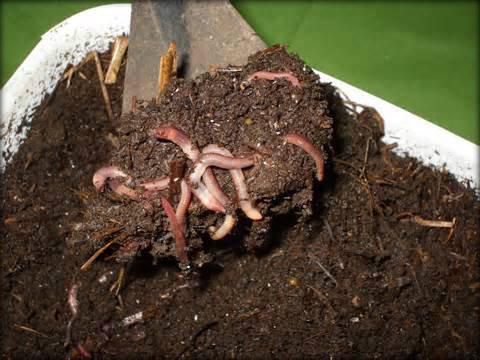 Representação do húmus. (Foto: Reprodução)