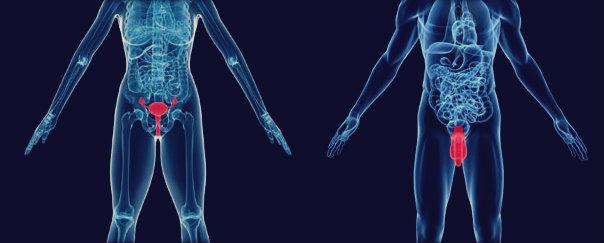 Gonorreia: causa, sintomas, tratamento e prevenção.