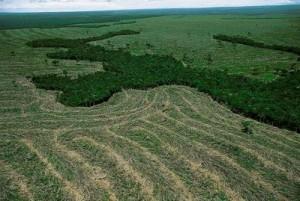 IMPACTOS AMBIENTAIS NA AMAZONIA