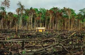 Desequilíbrios no meio ambiente