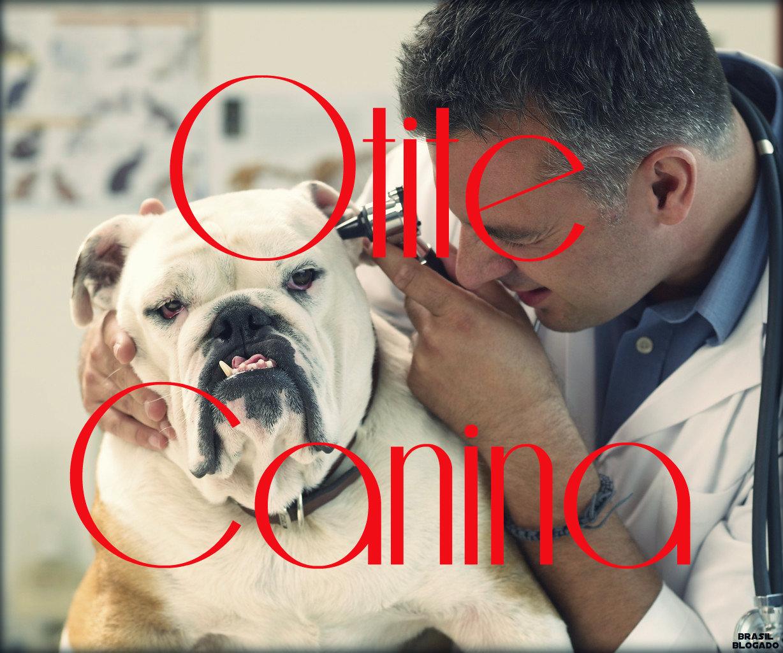 Otite canina: causas, tipos, sintomas, tratamento e prevenção.