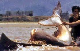 Grande peixe de água doce