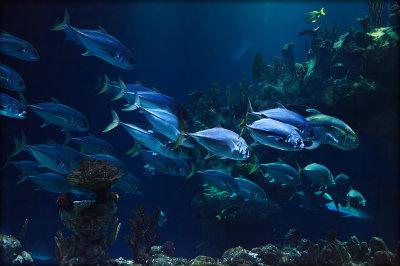 Características dos peixes