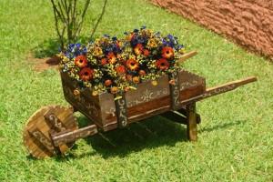 Plantas ornamentais para jardim