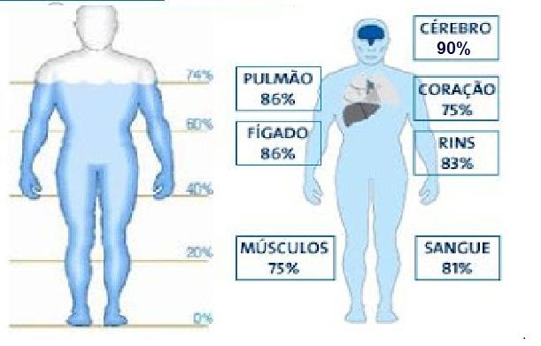 O nosso corpo é composto de água. Algumas partes,  contém mais do que as outras.