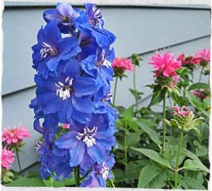 Apesar de parecer estranho, existe uma abelha azul.