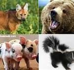 animais onívoros11