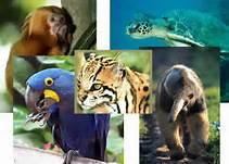 Extinção de animais/ tráfico