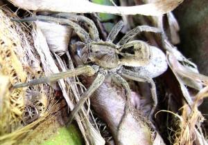 Tipos de aranhas