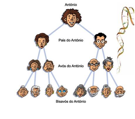 Observe a sua árvore genealógica e veja quem pode influenciar na produção de seu filho.