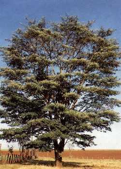 No Brasil ela pode ser encontrada em Minas Gerais e Mato Grosso.