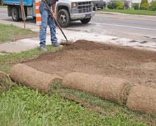 Como plantar grama