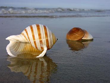 O mar vem e volta, mas sempre encontra uma bela maneira de nos mostrar as coisas belas do mundo.