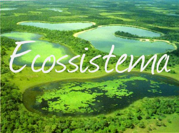 O ecossistema é o conjunto de tudo que esta presente no planeta Terra.