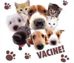 Faça parte dessa campanha você também. Vacine seu animal contra raiva é deixe ele ter uma vida melhor, saudável. Foto Reprodução