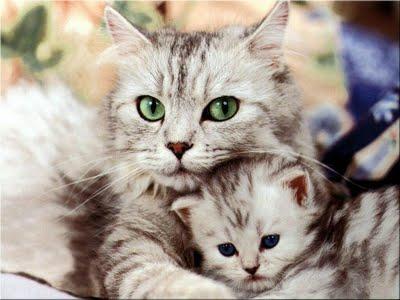 Cuide de seus animais, como se fosse realmente um filho.