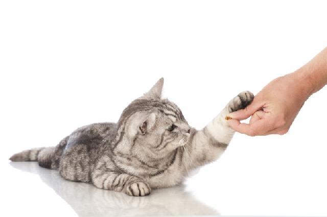 Saiba o que esta fazendo com seu animal de estimação.