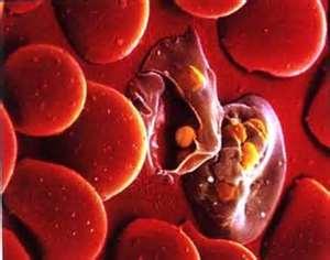 gênero Plasmodium assunto malária