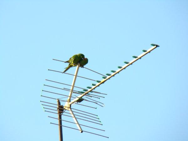 Os pássaros tendem a migrar devido ao clima do local onde moram, porém estão fazendo isso mais do que o devido, por causa da invasão humana, mediante ao seu habitat.