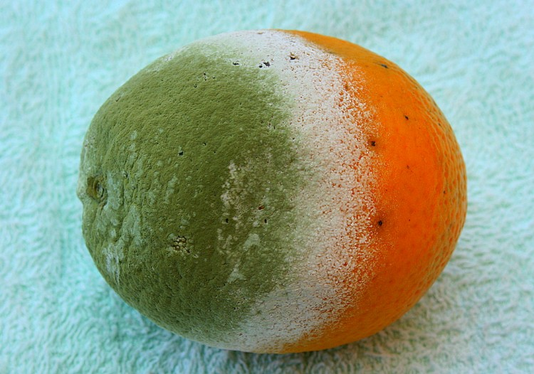 Verifique se a fruta se encontra em perfeito estado antes de consumi-la.