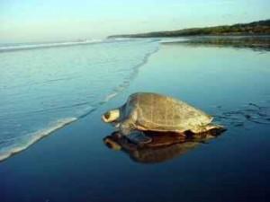 Extinção das tartarugas marinhas