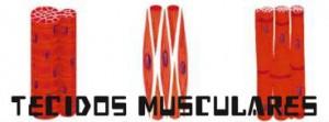 O tecido muscular, ainda necessita do auxílio do nervoso, para que algumas funções possam funcionar.