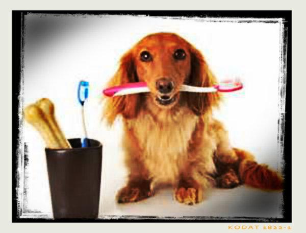 Escove os dentes deles, todos os dias.