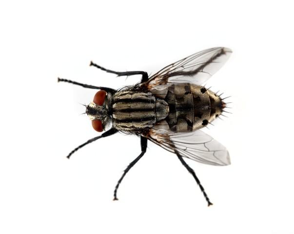 As vezes achamos que é apenas uma simples mosca, porém não é. Então não se deixe enganar por nada, se previna.
