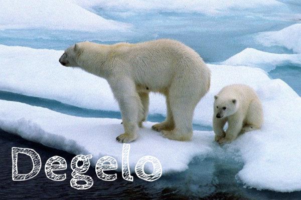 Usos polares, não estão tendo onde se abrigar.